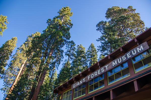 sequoia-national-park-198-M